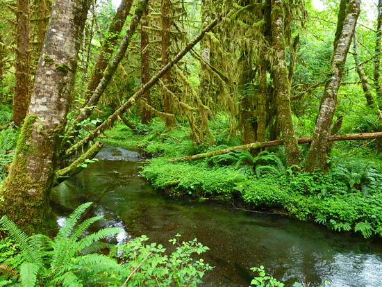 The Queets Rainforest
