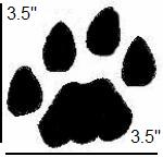 Mountain lion tracks - cougar tracks